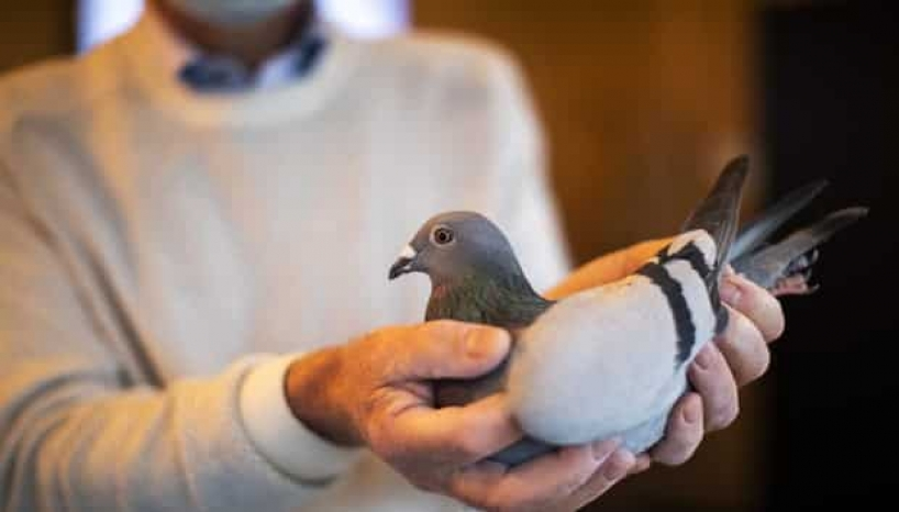 A Racing Pigeon Just Got Purchased For 22 Crore Rupees After A 2 Week Long Bidding War