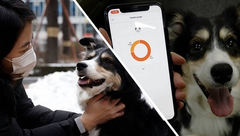 Can This Collar Really Read Your Dog's Emotions?
