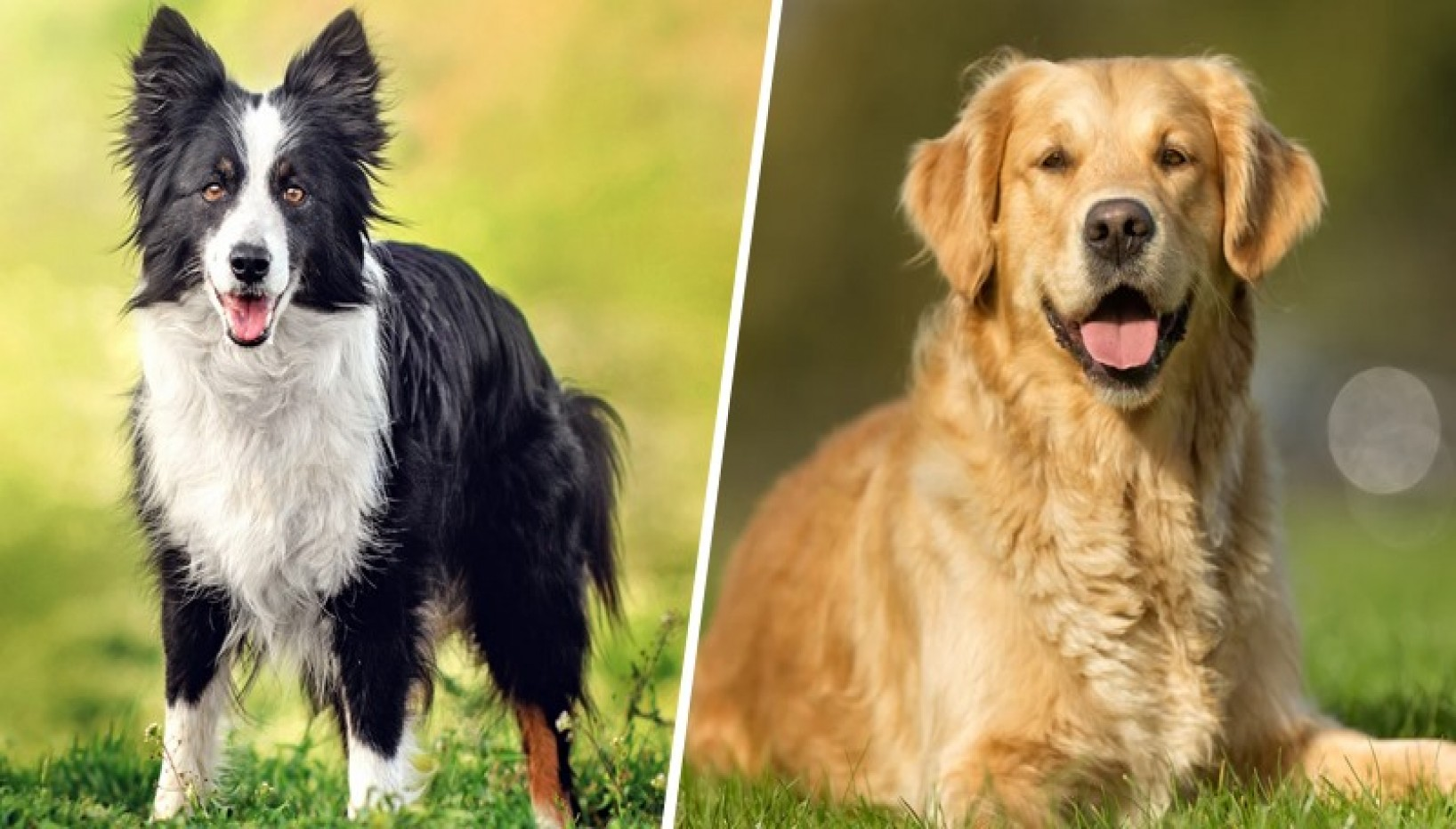 Pawsome Doggo Quiz: Can You Name The Breed Of These 10 Awwdorable Puppies?