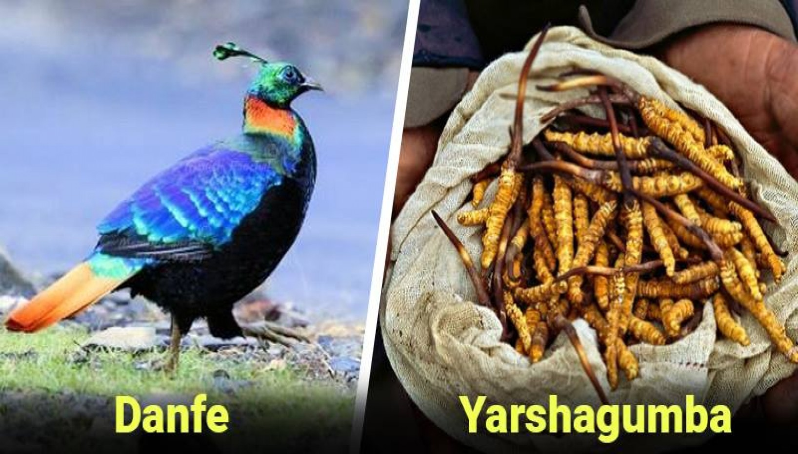 10 Of Nepal's Rare Flora and Fauna You Might Be Able To Spot on Your Travels