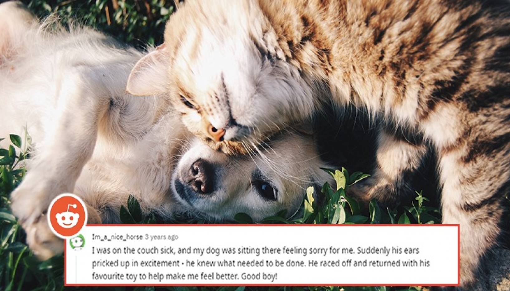 Redditors Share Awwdorable Stories About The Sweetest Things Their Pets Did