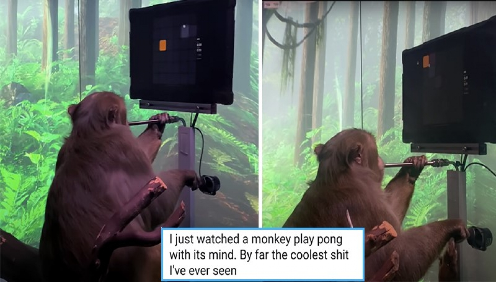 WATCH: Brain Chip Implanted Monkey Plays Videogame Using His Mind