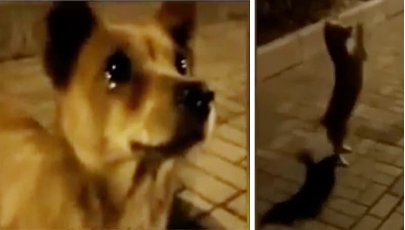 WATCH: Stray Dog Cries Tears Of Joy After Being Fed By A Generous Woman
