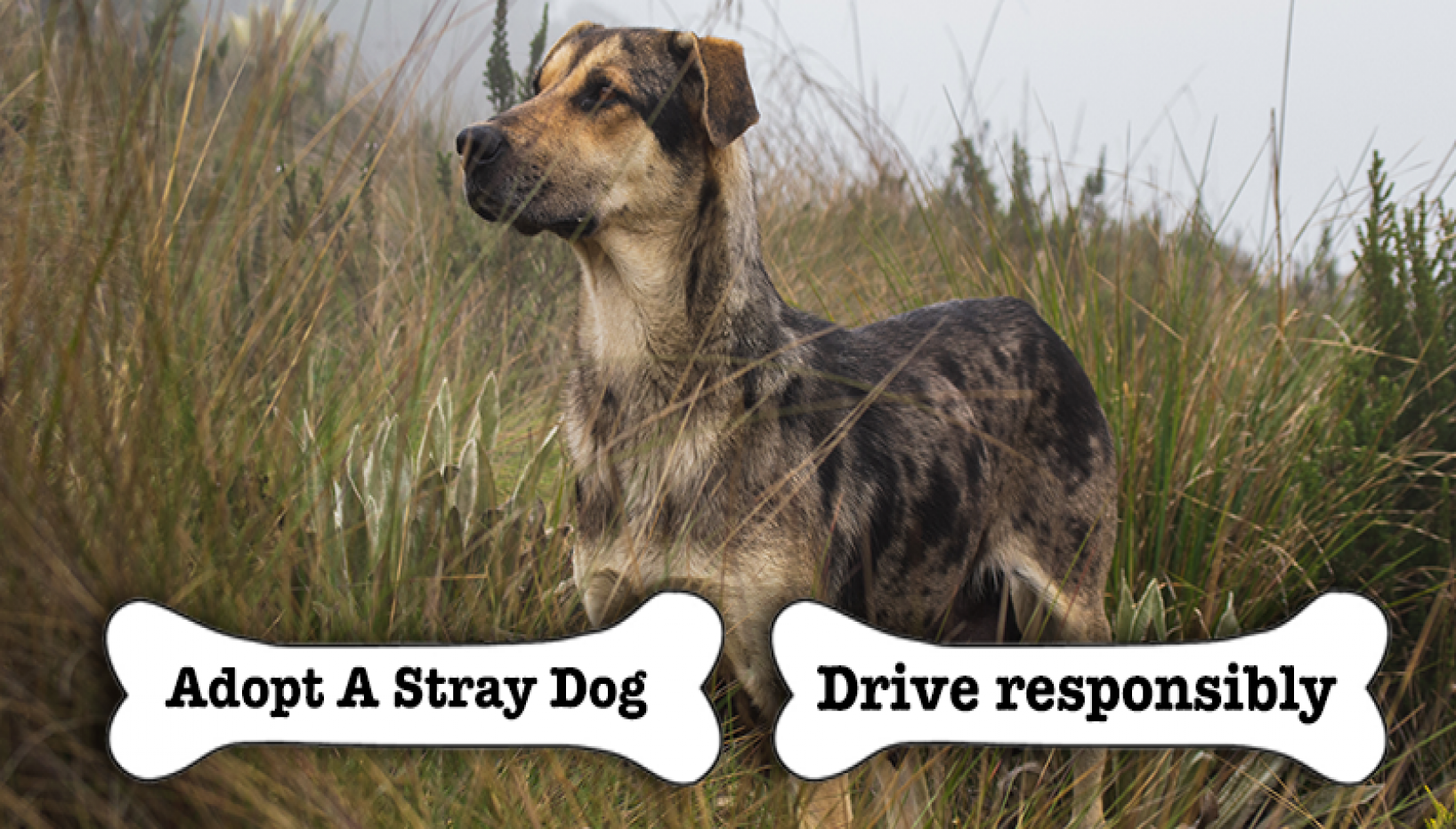 We Lost 'Khaire' But We Can Save The Rest; Here Are 5 Simple Deeds To Ensure Safety Of Stray Dogs